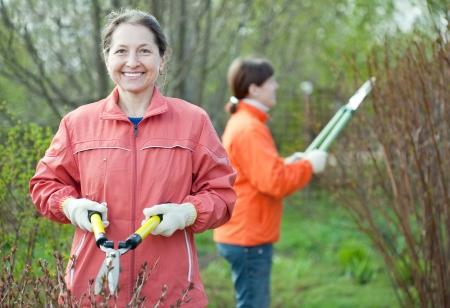 Two female  gardeners working in spring garden photo