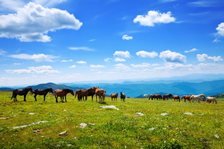 mongolia horse: mountains landscape with  herd of horses  Altai, Siberia  Stock Photo