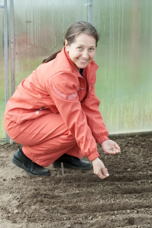 sows: Mature woman  sows seeds in soil at hothouse
