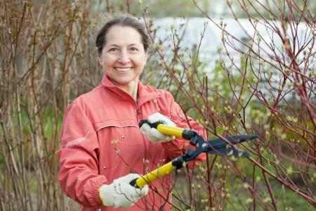 bush trimming:  female  gardener working in spring garden