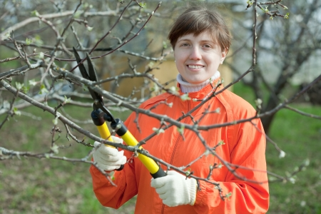 pruning scissors:  woman pruning fruits tree in the orchard