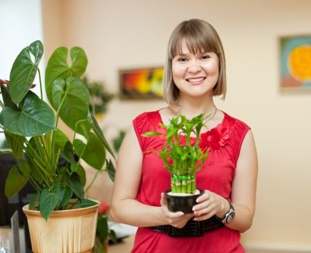adult vietnam: Girl with lucky bamboo plant at her home Stock Photo