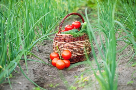 Harvest vegetables in baskets on the ground photo