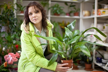 Woman chooses aspidistra flower in a flower shop Stock Photo - 16142622