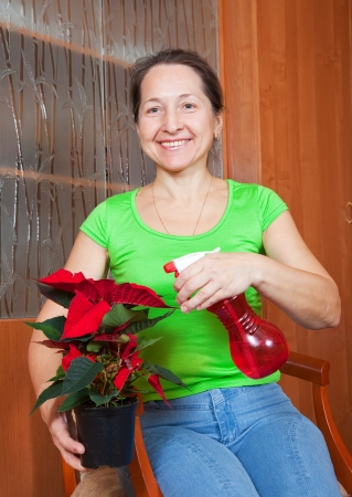 Mature woman with Poinsettia flowers in the pot at her home photo