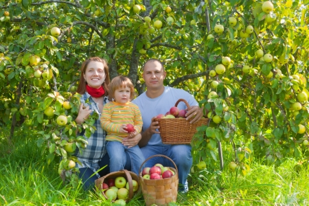Happy parents and child with basket of harvested apples in garden photo