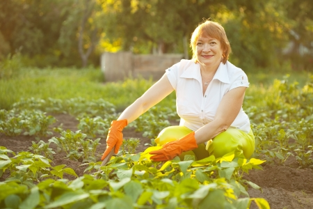 Happy mature woman working in her vegetable garden photo