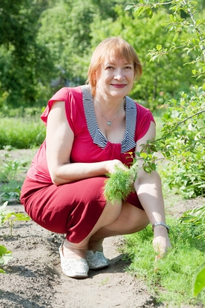 50 55: Mature woman is picking dill in garden Stock Photo