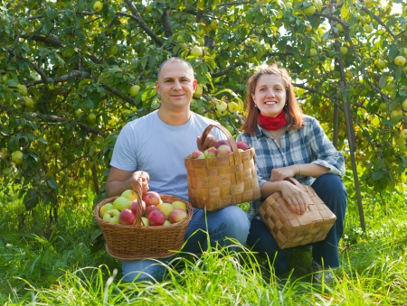 Happy couple with baskets of harvested apples in garden photo
