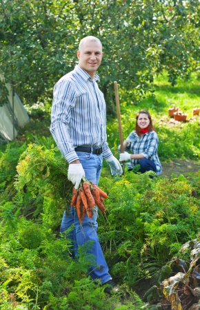unwashed:  couple  harvesting carrots in garden