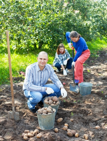 Happy family harvesting potatoes in vegetable garden photo