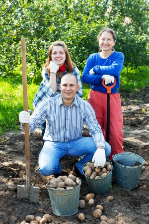 Happy family harvesting potatoes in vegetable garden Stock Photo - 16458011