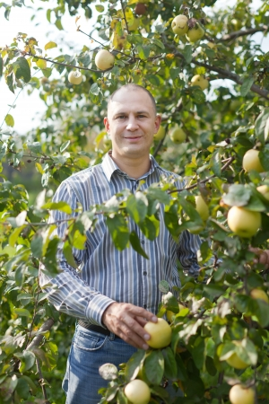 Middle-aged man surrounded by  apple trees at orchard  photo