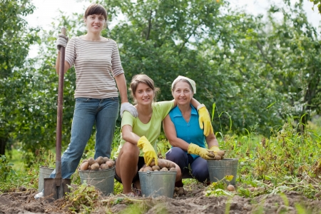 three women harvested potatoes in field photo