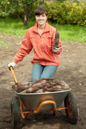 unwashed: young woman with beetroot harvest in field