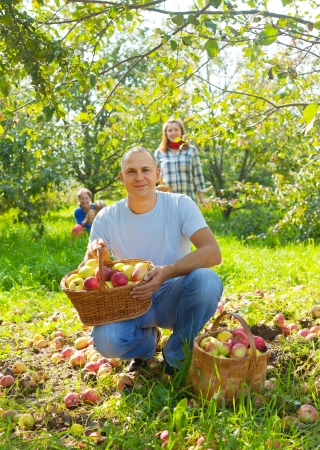Happy  family  with apple harvest in orchard Stock Photo - 16848535