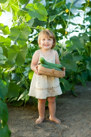 2 years child picking cucumbers in hothouse Stock Photo - 16862647