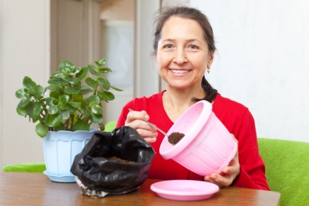 woman transplants potted flower at  home Stock Photo - 16884476