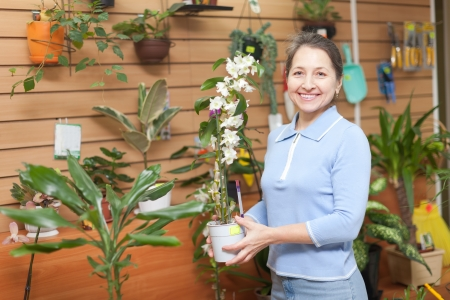 Mature woman chooses Dendrobium orchid  in a flower shop Stock Photo - 16970099