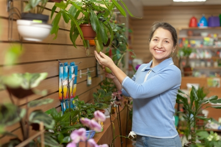 Female florist with Nepenthes plant at flower store  photo