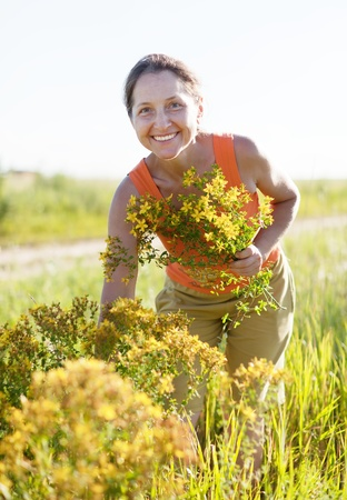 Mature woman gathers Hypericum at wild meadow Stock Photo - 16884538