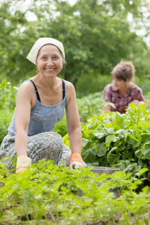 agriculturalist: Two women working in her vegetable garden
