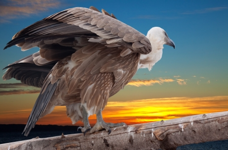 Griffon vulture sitting on wood trunk  against sunset sky background Stock Photo - 16925508