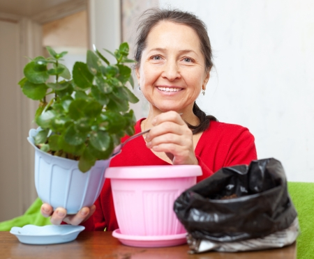 transplants: Mature woman transplants potted flower at her home