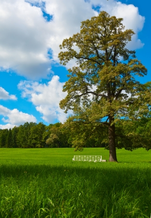 Summer landscape with oak and green lawn photo