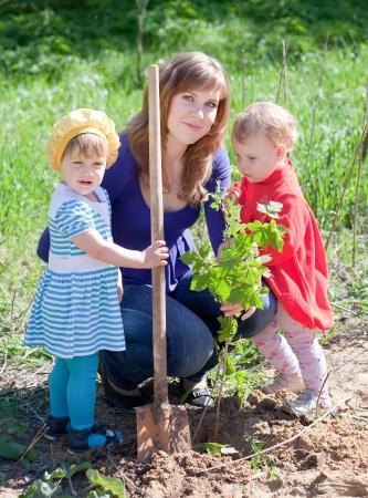 plantando arbol: brotes familiares de plantación con pala al aire libre