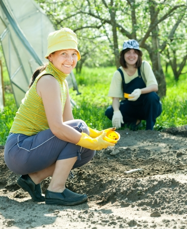 Two women sows seeds in soil at field photo