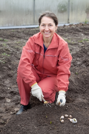 Mature woman checkrows sets garlic in soil at field photo