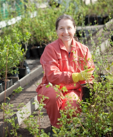 Female gardener chooses currants sprouts at market Stock Photo - 17381089