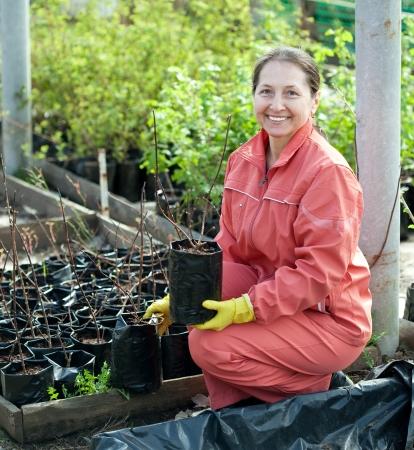 Female gardener chooses bush sprouts at market Stock Photo - 17381024