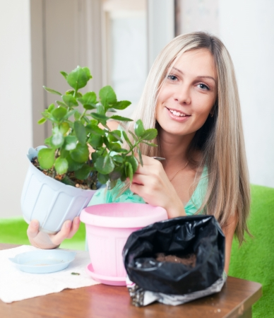 transplants: Young woman transplants  Kalanchoe flower at  home