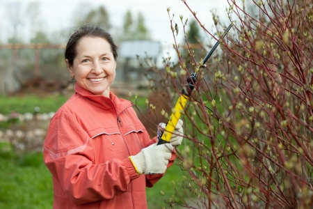 Mature woman pruning bush in the garden  photo