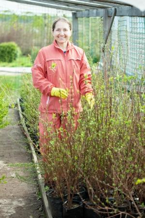 Maure woman chooses bush sprouts at market Stock Photo - 17446366