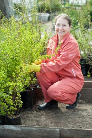 Female gardener chooses bush sprouts at market Stock Photo - 17509739