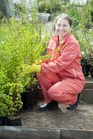 Female gardener chooses bush sprouts at market Stock Photo - 17509739