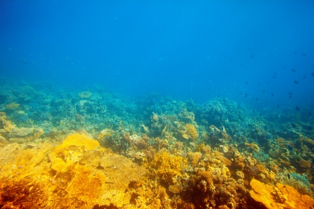 reefscape: coral reef area in Red sea