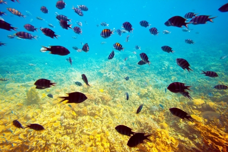 reefscape: Photo of tropical fishes at coral reef area