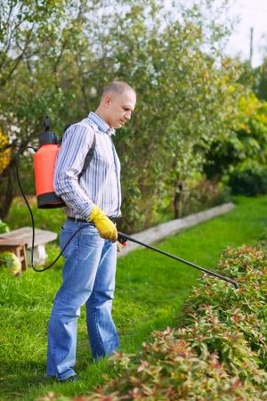 Man works with garden spray  in the yard photo