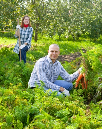 Happy couple is picking carrot in field photo