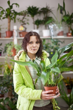 aspidistra: woman in flower shop near the shelves with flower pots