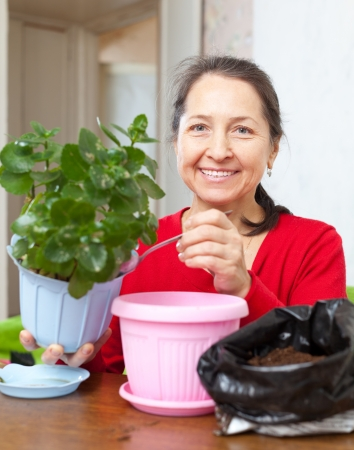 transplants: Mature woman transplants potted flower at home Stock Photo