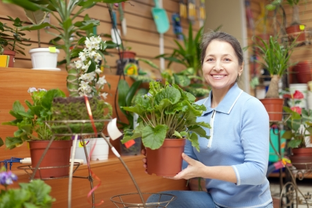 Happy mature woman chooses auricula  in flower store photo
