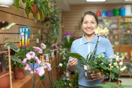 Happy mature woman chooses Phalaenopsis  in pot at flower shop photo