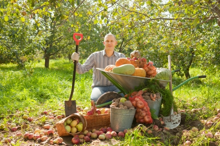 average age: Happy man with vegetables harvest in garden