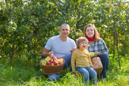 Happy parents and child with baskets of harvested apples in garden Stock Photo - 17926076
