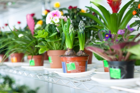 hyacinth  surrounded by different flowers in flower store Stock Photo - 18614380